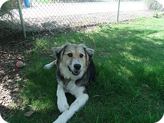 German Shepherd Dog Mix Dog for adoption in Gadsden, Alabama - Wynter