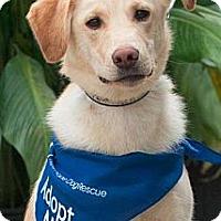 Adopt A Pet :: Fritz - Saskatoon, SK