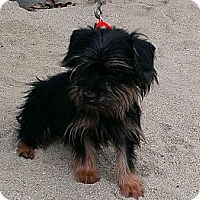 Adopt A Pet :: Skittles - Santa Monica, CA