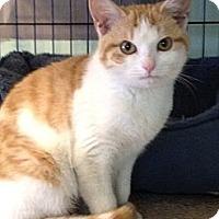Adopt A Pet :: Cleo - Monroe, GA