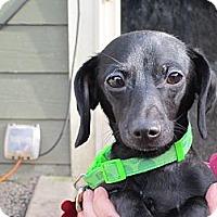 Adopt A Pet :: DELLA - Portland, OR