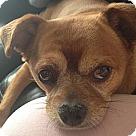 Adopt A Pet :: Cini