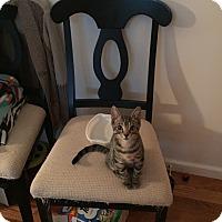 Adopt A Pet :: Hugo - Speonk, NY