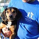 Adopt A Pet :: Marshal