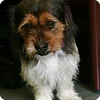 Adopt A Pet :: Mario - Meridian, ID