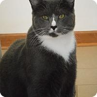 Adopt A Pet :: Fuji - River Edge, NJ