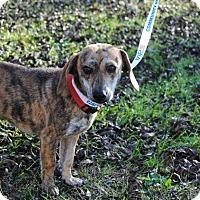 Adopt A Pet :: Lily - Berkeley Heights, NJ