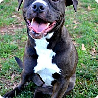Adopt A Pet :: Lena 3 - Dallas, GA