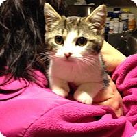Adopt A Pet :: Thumbelina - East Brunswick, NJ