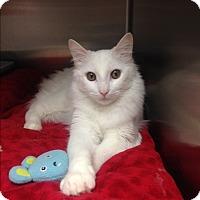 Adopt A Pet :: Pretty Boy - Newport Beach, CA
