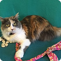 Adopt A Pet :: Turley - Colorado Springs, CO