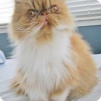 Adopt A Pet :: Rosie the Sweetie - Davis, CA