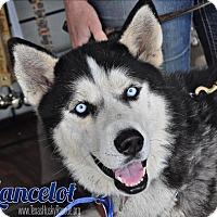 Adopt A Pet :: Lancelot-Foster Needed! - Carrollton, TX
