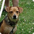 Adopt A Pet :: Leslie