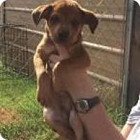 Adopt A Pet :: Shawn - Rexford, NY