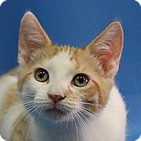 Adopt A Pet :: Calvin - Overland Park, KS
