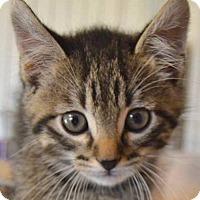 Adopt A Pet :: Panthro - Enid, OK