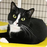 Adopt A Pet :: Lela - Medina, OH