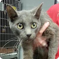 Adopt A Pet :: Merlin - Paducah, KY