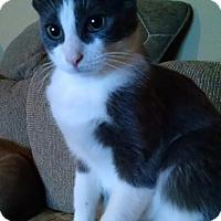 Adopt A Pet :: Diamond Girl - Garden City, MI