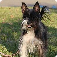 Adopt A Pet :: Pepper - Brunswick, ME