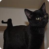 Adopt A Pet :: Dove - Ridgeland, SC