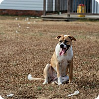 Adopt A Pet :: Fluffy - Raeford, NC
