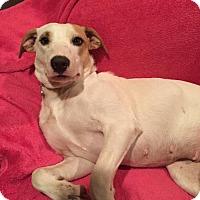 Adopt A Pet :: Smiley - Barnhart, MO