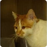 Adopt A Pet :: Tom Tom - Hopkinsville, KY