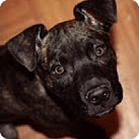 Adopt A Pet :: Ruby - Justin, TX