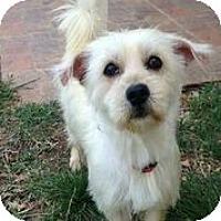 Adopt A Pet :: Gwyneth Paltrow - Austin, TX