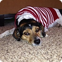Adopt A Pet :: Wilma - Covington, KY
