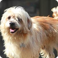 Adopt A Pet :: Ellis - Norwalk, CT