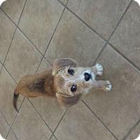 Adopt A Pet :: Pippa - Marietta, GA
