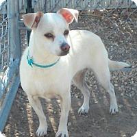 Adopt A Pet :: Elsa - Meridian, ID