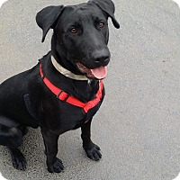 Adopt A Pet :: Titan - Joliet, IL