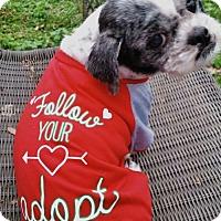 Adopt A Pet :: Zaara - Newark, DE