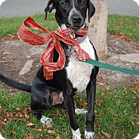 Adopt A Pet :: Speckles - Richmond, VA