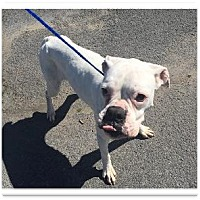 Adopt A Pet :: Maggie - Brentwood, TN