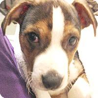 Adopt A Pet :: Austin - Cincinnati, OH