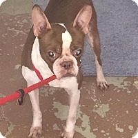Adopt A Pet :: Helen - Weatherford, TX
