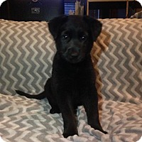Adopt A Pet :: Nellie - Little Rock, AR
