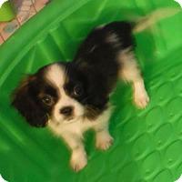 Adopt A Pet :: Carson Pending - Manchester, NH