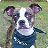 Adopt A Pet :: Twinkle - Mocksville, NC