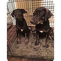 Adopt A Pet :: AIDEN - Moosup, CT