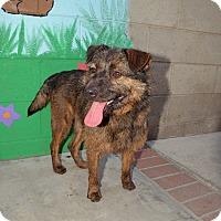 Adopt A Pet :: Wolfman Jack - Van Nuys, CA