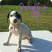 Beagle Mix Puppy for adoption in Ararat, Virginia - Angelica