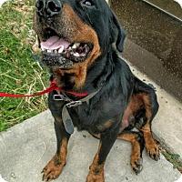 Adopt A Pet :: RENO - San Antonio, TX