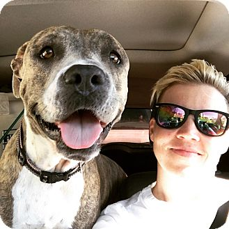 American Staffordshire Terrier/American Pit Bull Terrier Mix Dog for adoption in Los Angeles, California - Lily