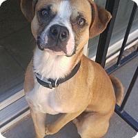 Adopt A Pet :: Willoughby - Albuquerque, NM